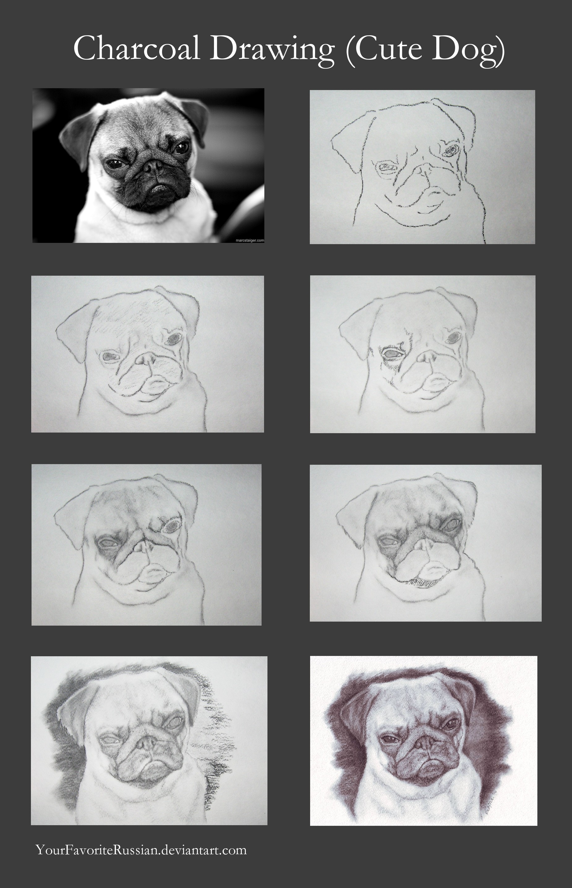 Charcoal drawing tutorial cute dog by yourfavoriterussian on