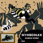 Myoscolex