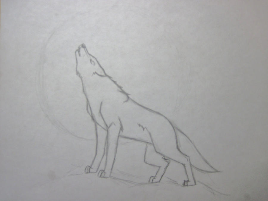 Sketches Of Wolves How...