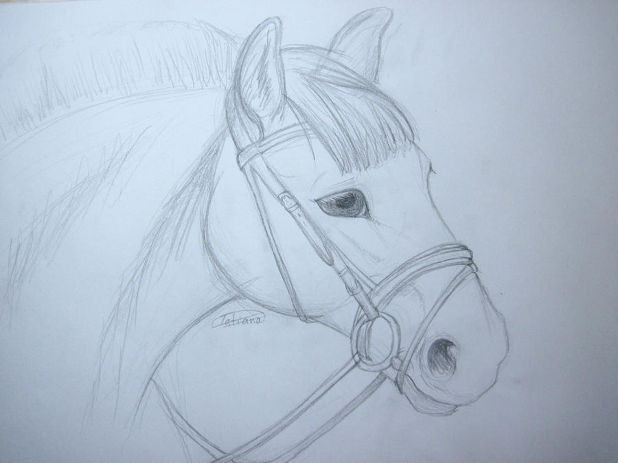 Horse Practices -OLD- Horse_sketch_practice_by_tatiilange-d3id47p