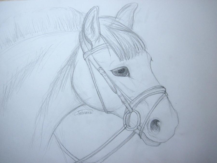 tatii Admin´s Art Horse_sketch_practice_by_tatiilange-d3id47p