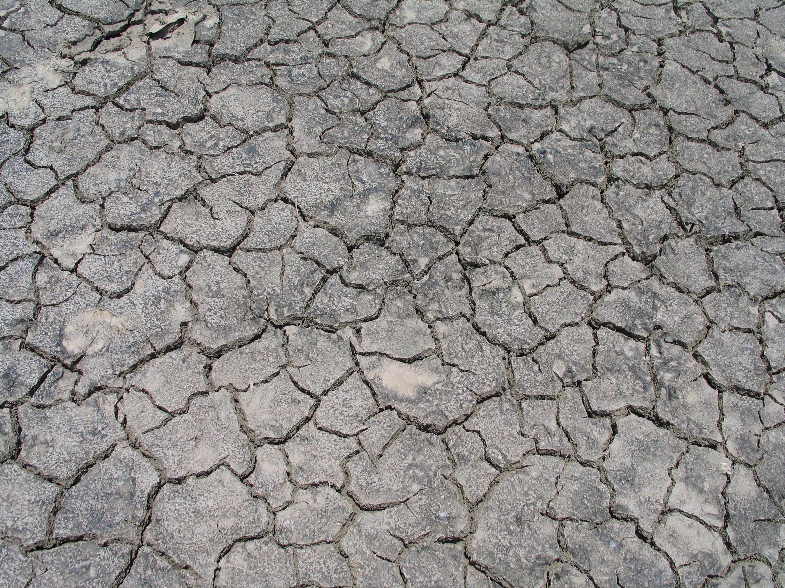 Cracked Ground Texture by Tusserte