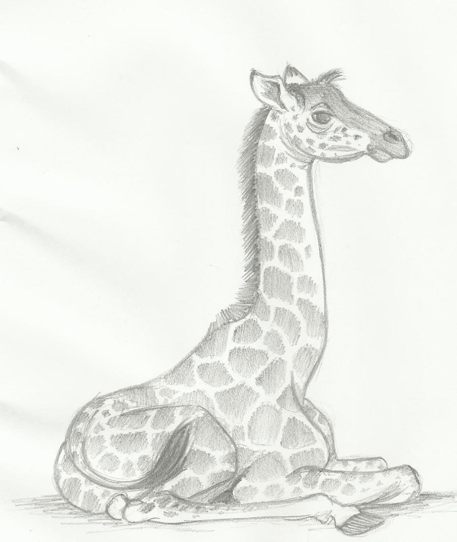 sketches of baby animals