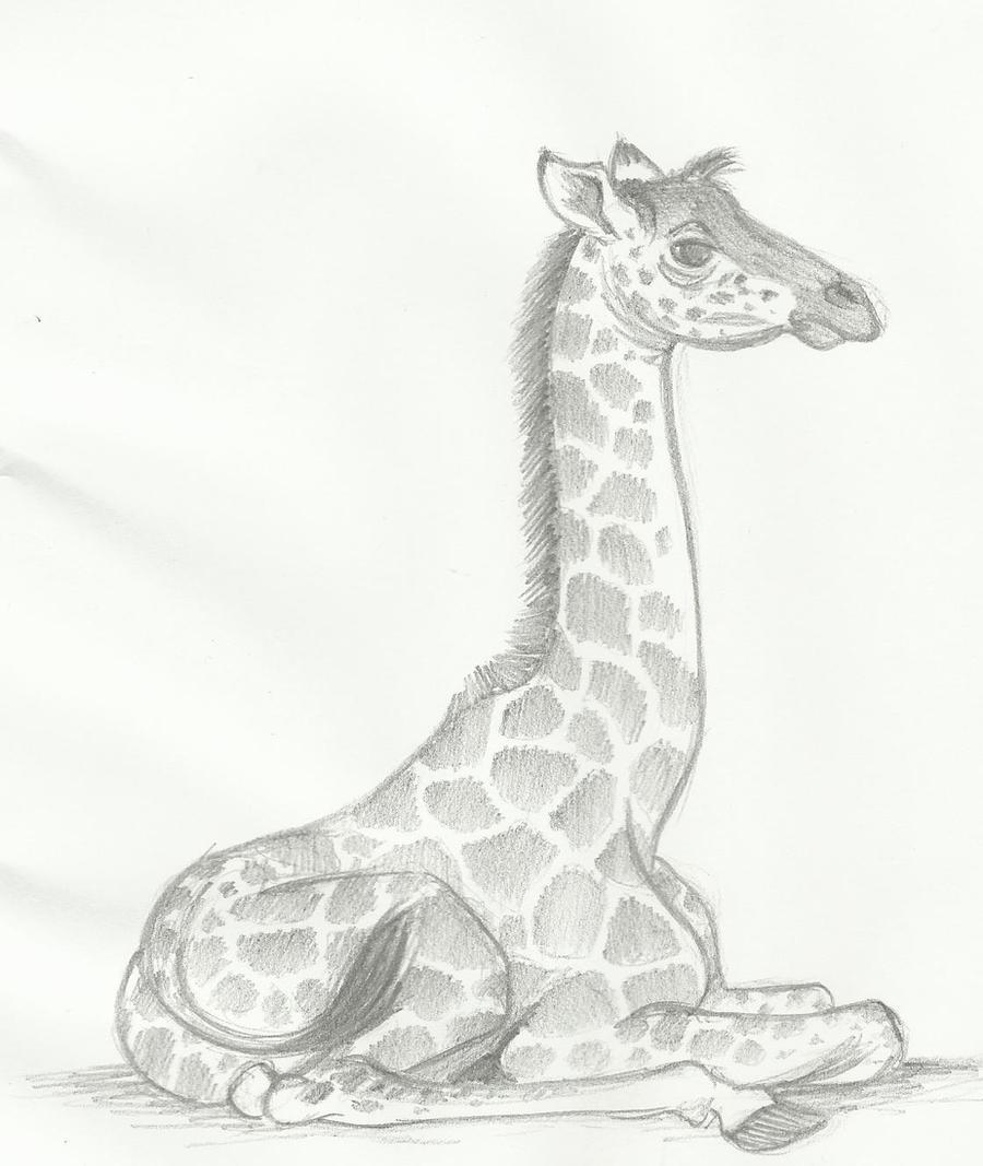 Baby Giraffe by huntergirl463 on DeviantArt Cool Giraffe Drawing