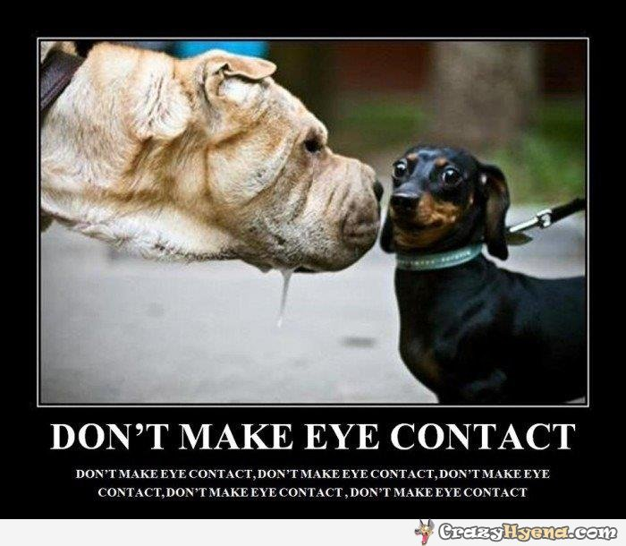 Funny Dog Quotes Pictures By Pepion11 ...