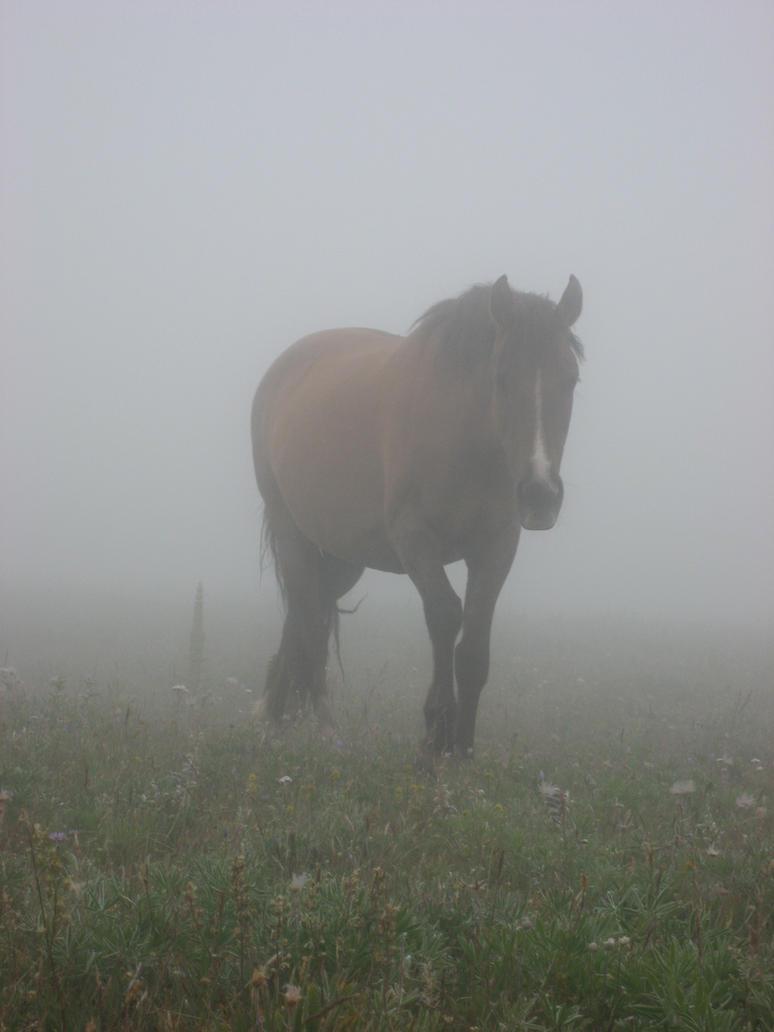Through the Fog by SilverFlameWanderer