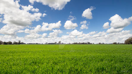 Lush green fields