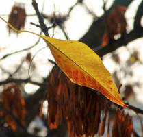 A New Autumn VIII by MatiasPage