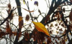 A New Autumn IX by MatiasPage