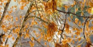 A New Autumn X by MatiasPage