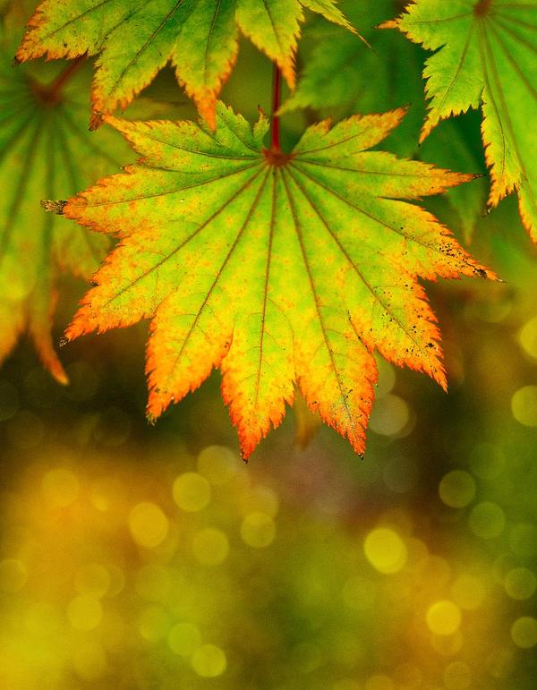 Calendar Contest Autumn Bokeh by snak