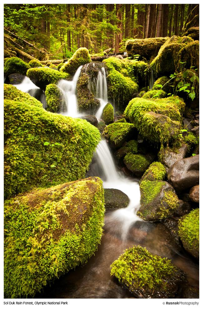 Sol Duk Rain Forest by snak