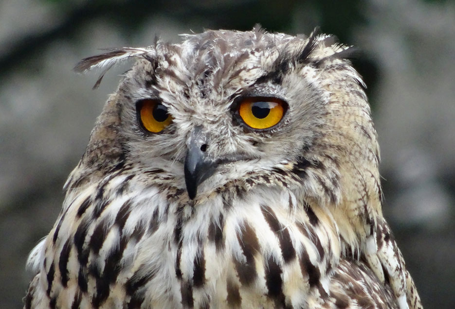 Slightly Retarded Owl by efleck