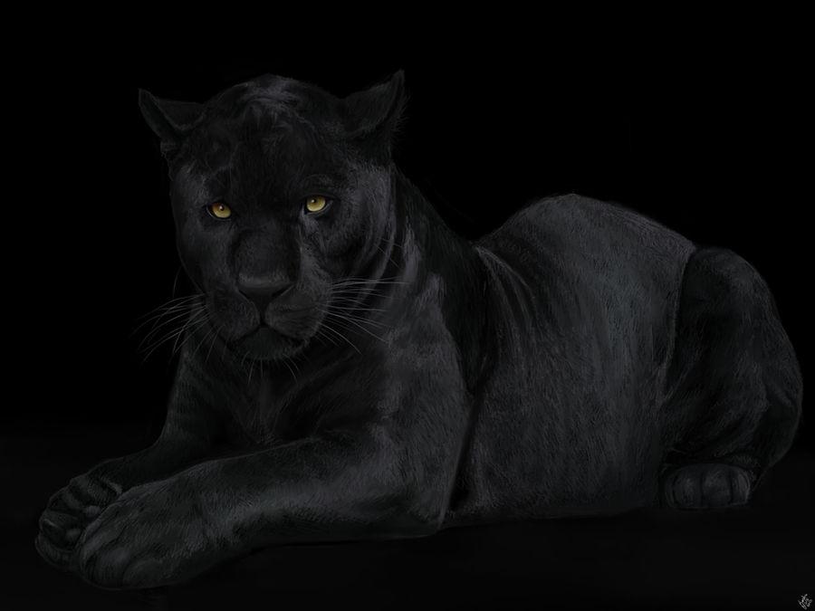 The Black Panther. by Alexandoria