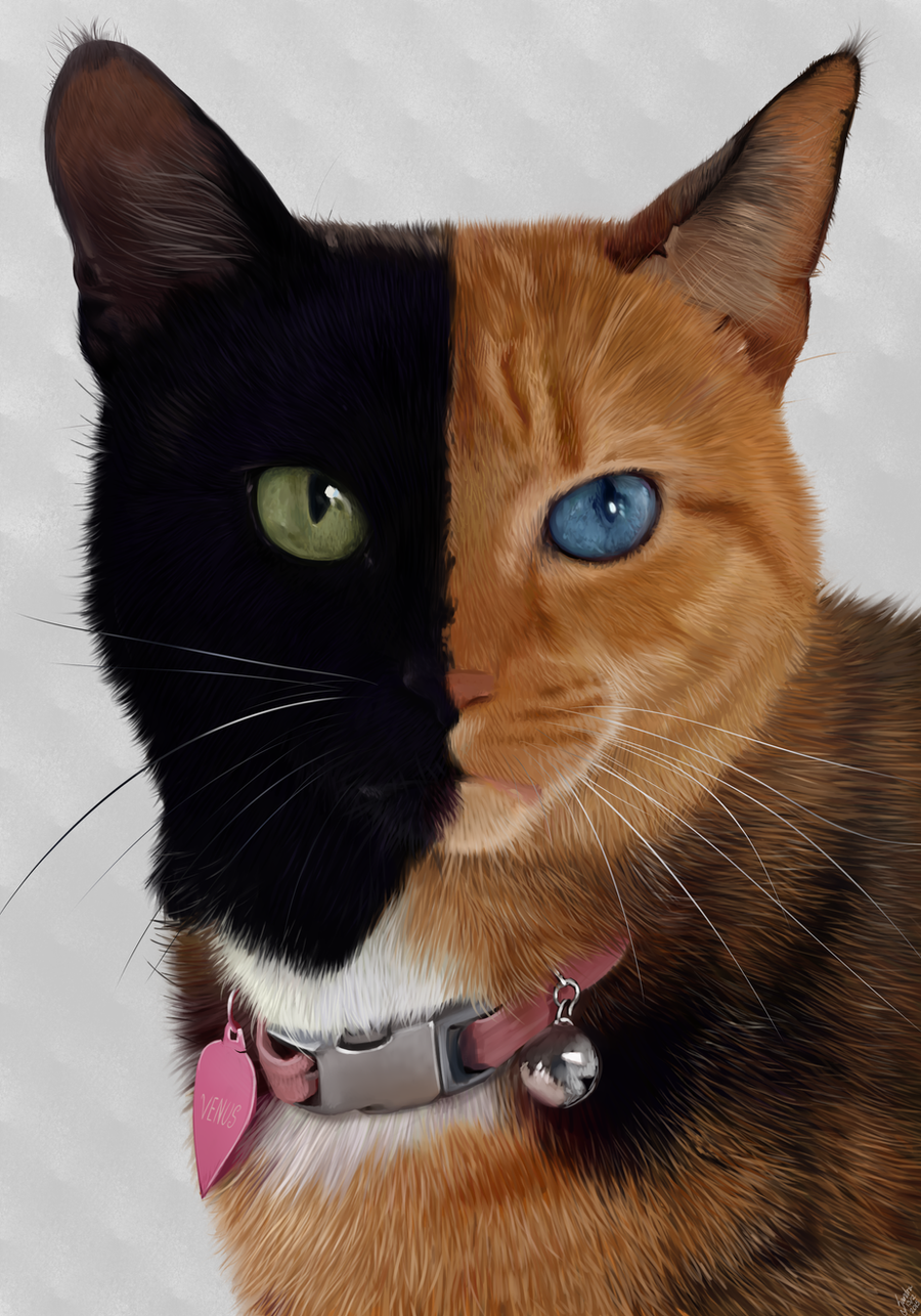 Venus The Two Faced Cat Portrait By Alexandoria On DeviantArt - Venus two faced cat