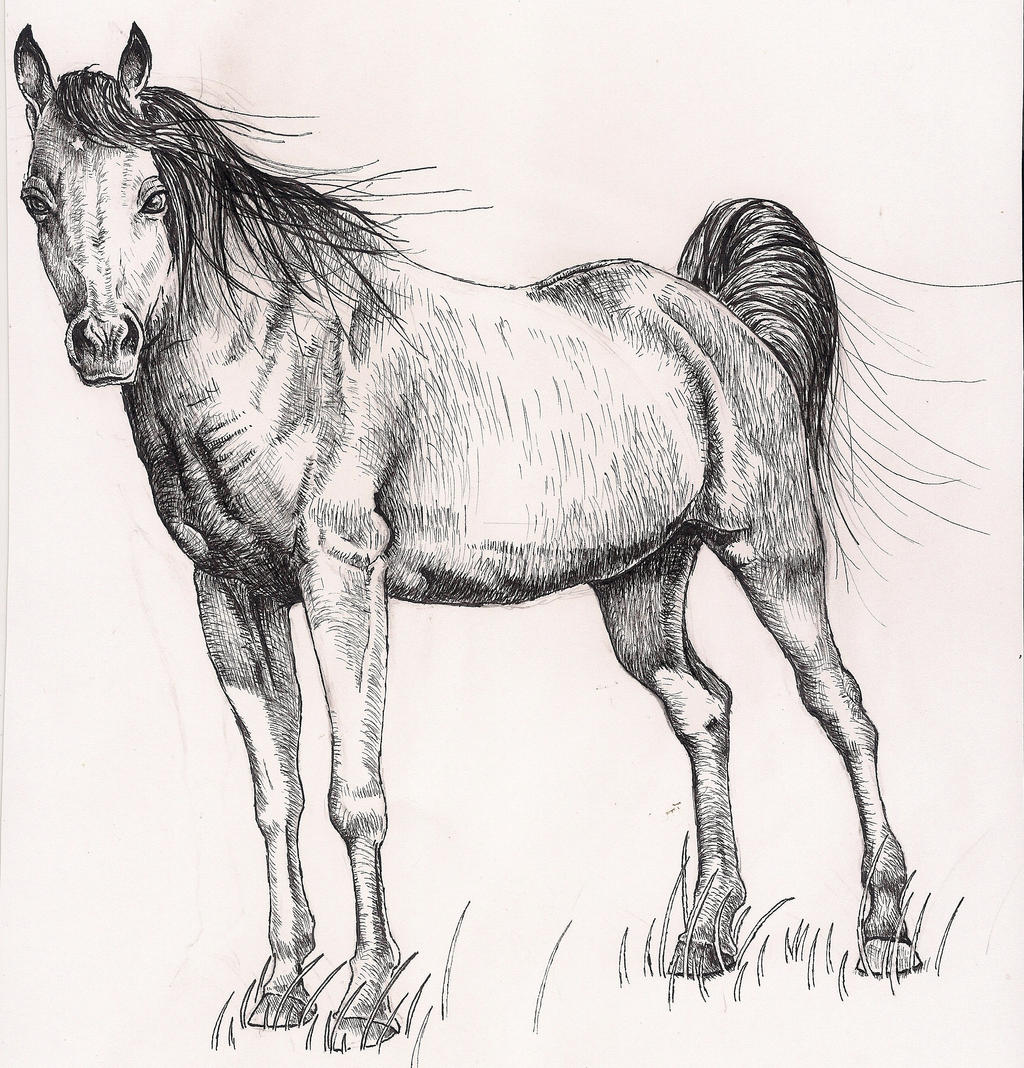 Horse Drawing by rhyshaug