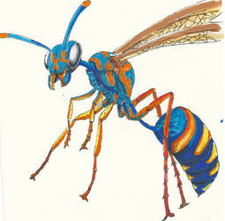 Colorful Wasp by rhyshaug