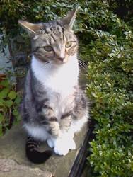 Pumkin The Cat