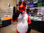 Fox in the convention house