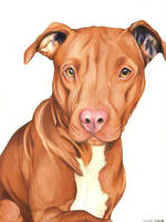 Pit bull by Schuypuh