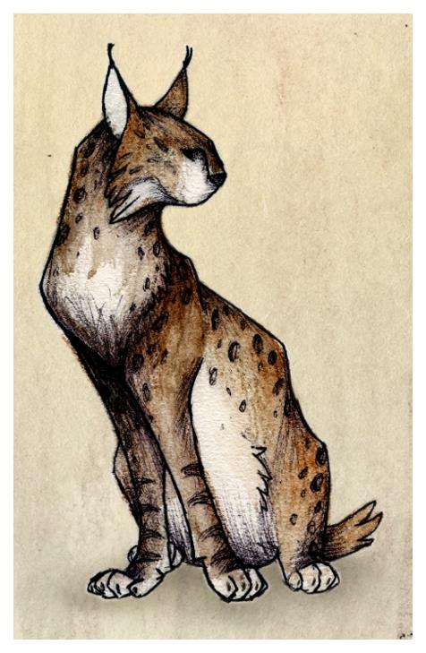 lynx by Asralore