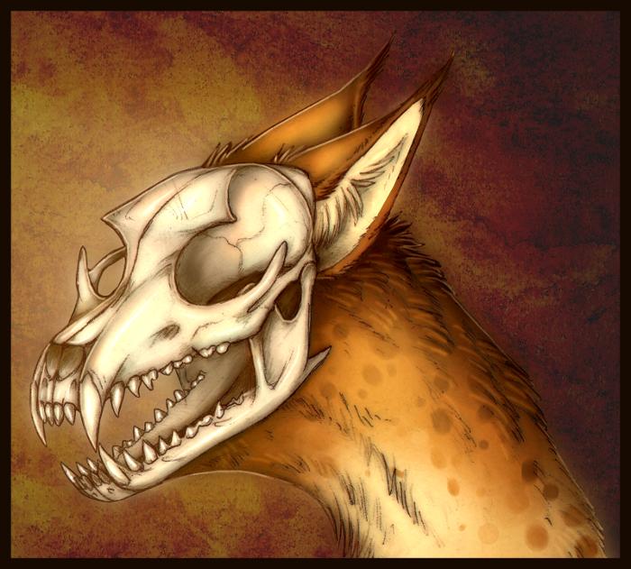 Skull by cr4zyc4t