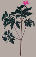 Plant Study III by reimena