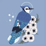 Familiar: Blue Jay