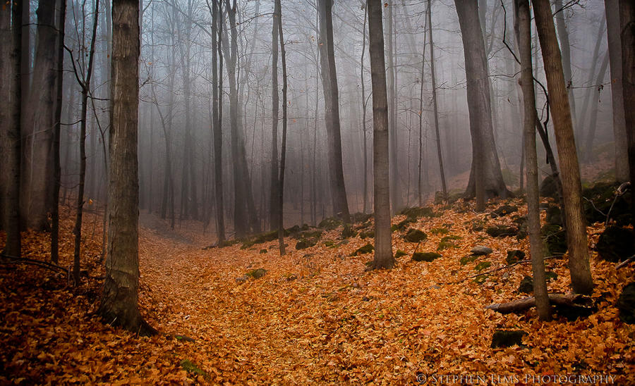 foggy forest by a - photo #40