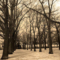 Allee by Jibril85