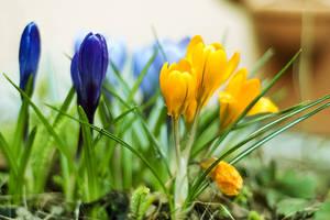 Spring by Jibril85