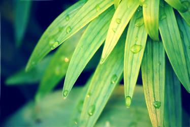 Spring Rain by ElsiaStar