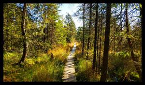 a path through