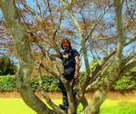 .:The Perfect Tree For Climbing:. by Shadouge4eva