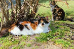 .:The Vibrancy of a Calico:.