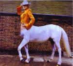 centaur cowgirl