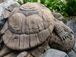 Tortoise On The Tree by DisneyDaleMunk
