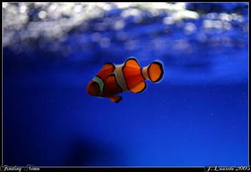 Finding Nemo by Laretsi