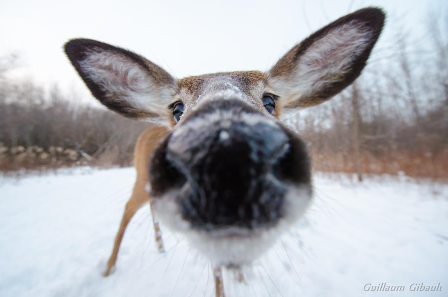 Am I too close ? by GuillaumGibault