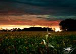 Indiana Sunrise by Murphoto