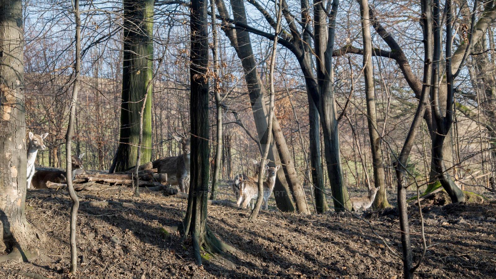 Fallow deers by 75ronin