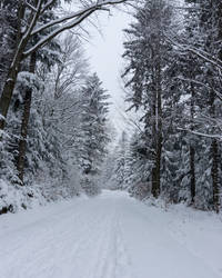 Snow-covered forest road...