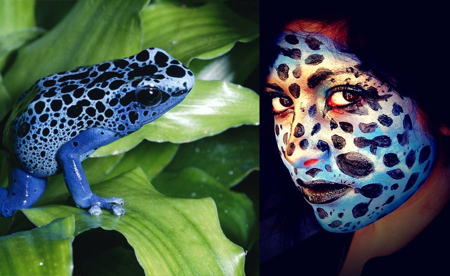 Blue Poison Dart Frog Wallpaper