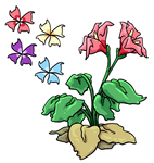 Piro Flower
