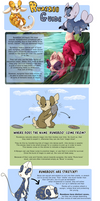 Runeboo Guide - Information Intro by Wyngrew