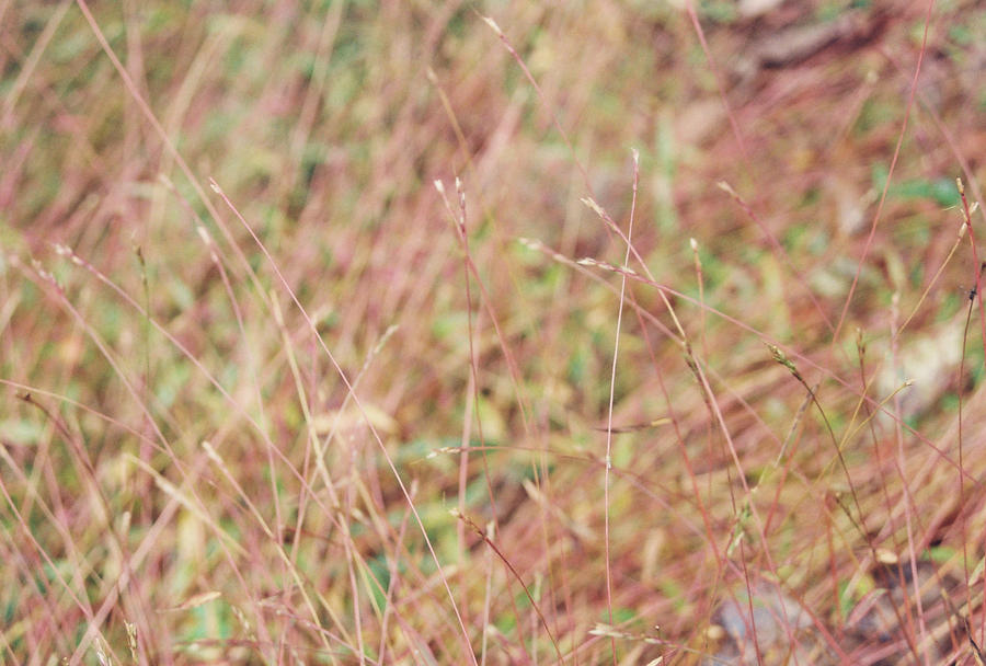 Purple grass things pretty by gatsby26 on deviantart for Pretty grass