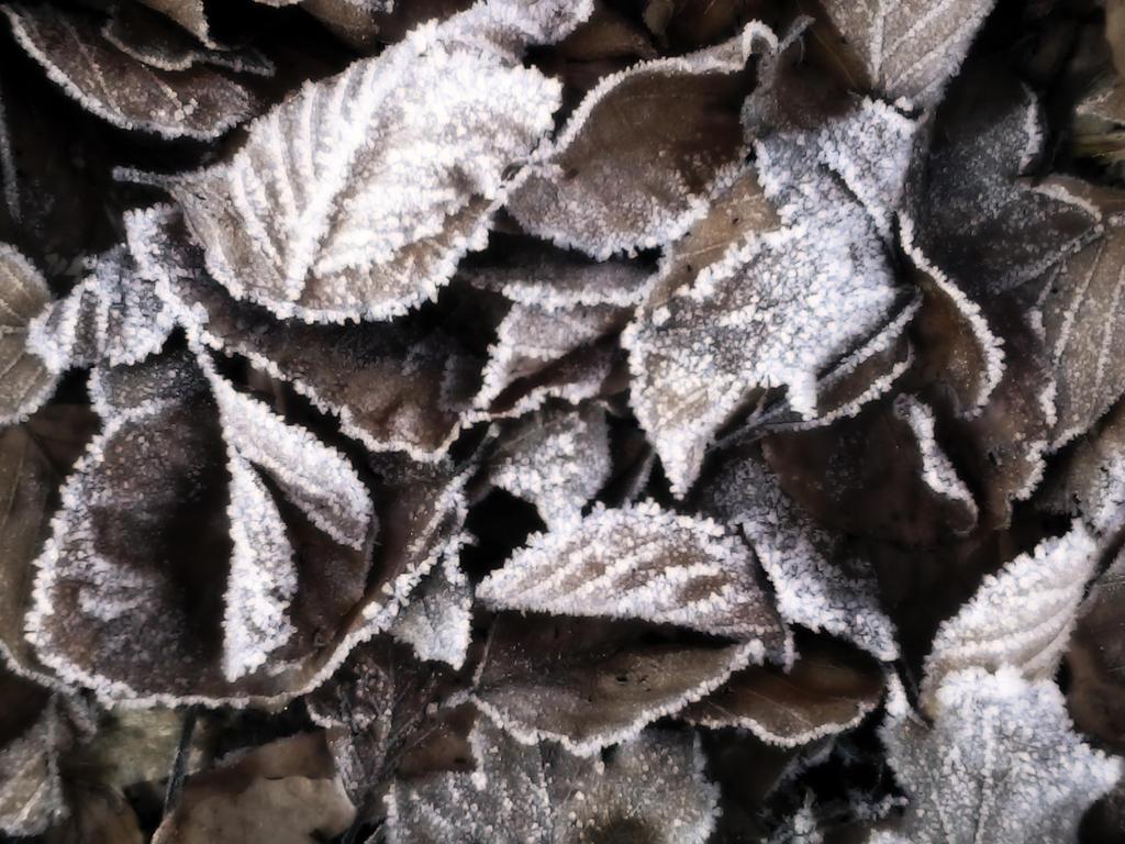 Frozen leaves by DenyG