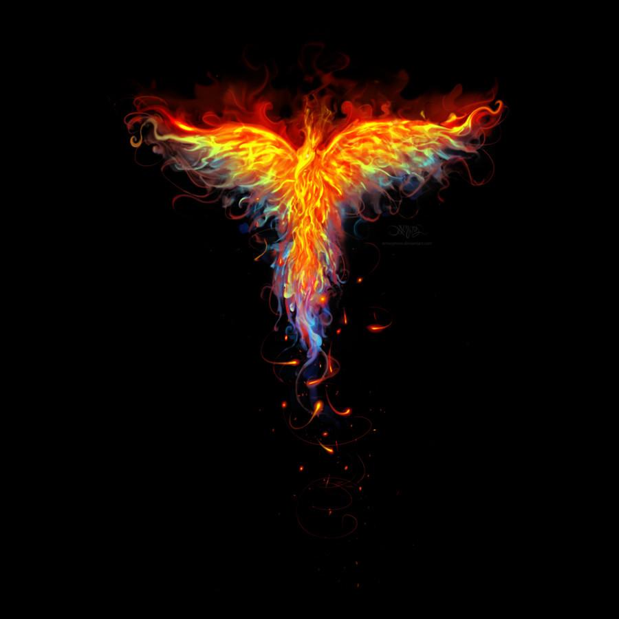 fire phoenix by designbyhumans on deviantart