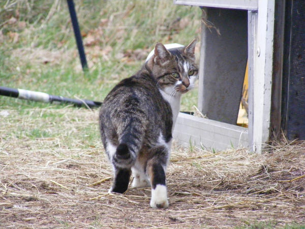 Cat 1 by xrockinrobynstock