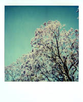 Tree by lloydhughes